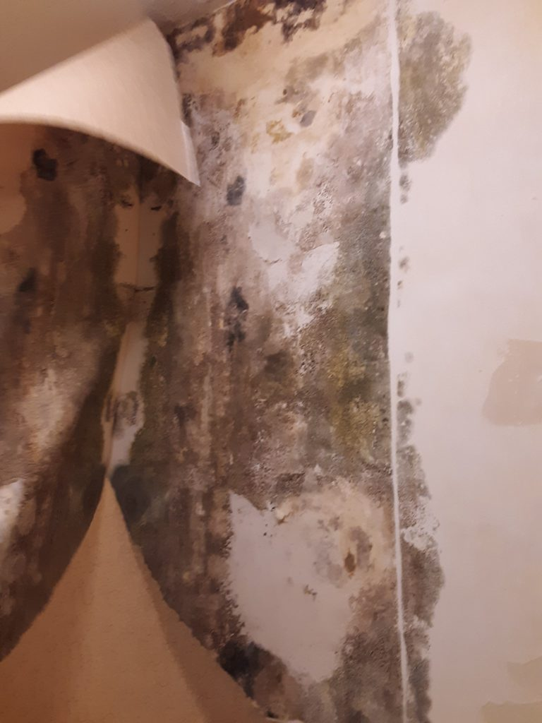 Mold in Drywall